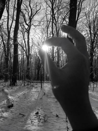 Close-up of hands against trees