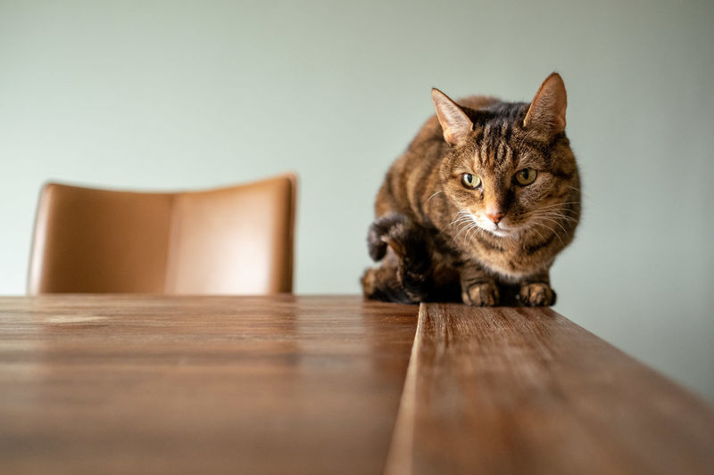 Cat sitting on wooden table