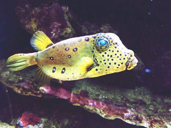 Akvarietibergen Bergen Taking Photos Enjoying Life Fish