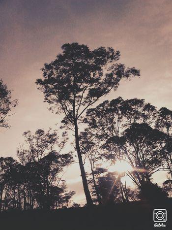 First Eyeem Photo Nature Photography Puebla, México. Tree And Sky Team EyeEm