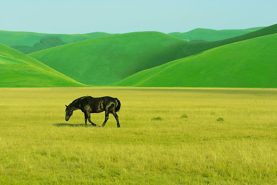 Sibillini Italy Horse Animal Themes Domestic Animals Landscape Green Color Environment Traveling Hobby Enjoying Life Objektifimden Landscape_photography Mountain Hello World Beauty In Nature Travel Destinations Colorful Outdoors Grass Canon Livestock Grazing One Animal Castelluccio