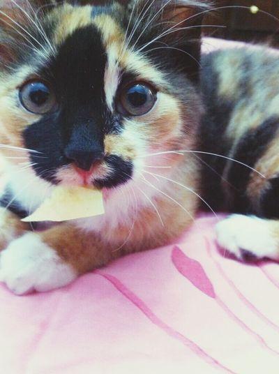 my Cat Kitty pepper :D