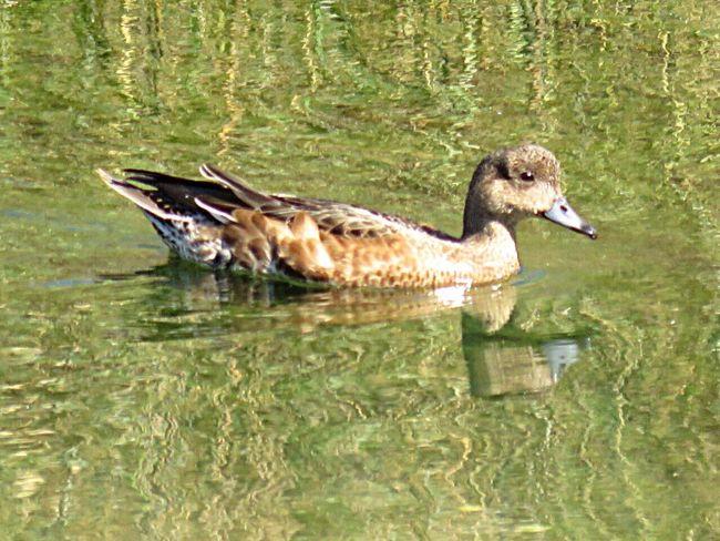 CuteFace Cuteanimals Bird Bird Photography Birdwatching Birds_collection EyeEm Birds Birds🐦⛅ Waterreflections  Reflection