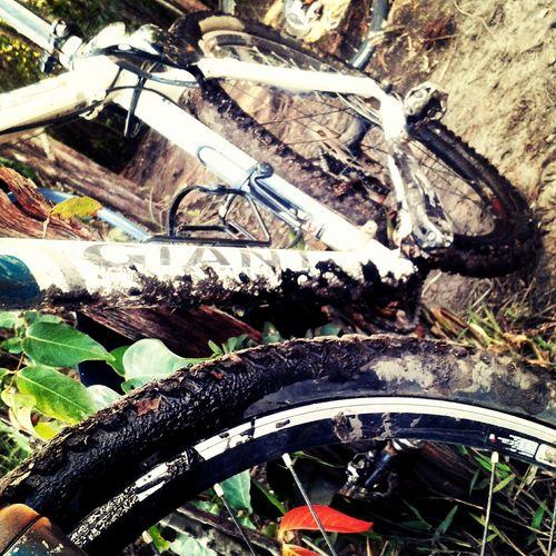 Autumn Colors Giantbicycle MTB Biking Brasil