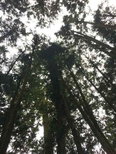 Forrest Ali Mountain Mountain Trees Thousand Year Old 阿里山 台湾 台南 森 樹