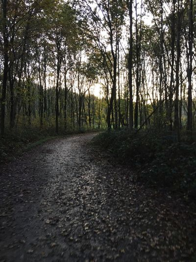 Woods Tree Forest Nature Road WoodLand Outdoors The Way Forward Landscape No People