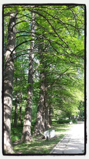 Green Aligned Nature Sun