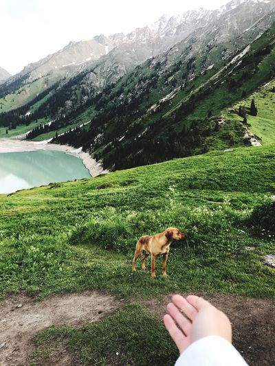 Green Color Animal Themes Grass Dog Lifestyles Mountain Nature Beauty In Nature One Animal Pets Day Outdoors