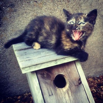 Zombie Kitty Kitten