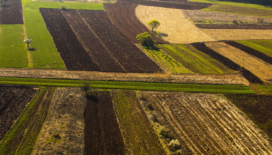 Agriculture Agriculture Photography Field Growth High Angle View Landscape Nature No People Outdoors Rural Scene