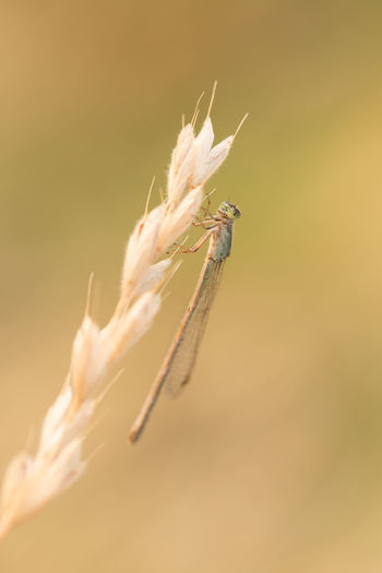 Close-up of dragon fly on plant