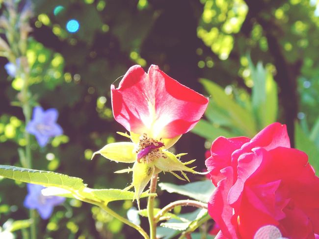 The Great Outdoors - 2015 EyeEm Awards Flowers Nature Nature_collection EyeEm Nature Lover Outdoor Pictures Roses Creative Light And Shadow