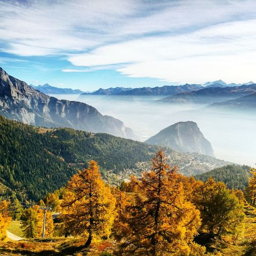 Fall Switzerland Swiss Valais Wallpaper Wallis Fully Giantbikes Giantbicycles Beautiful Color Colors Colorful Tree Mountain Forest Pine Tree Pinaceae Tree Area Tea Crop Sky Landscape Mountain Range Mountain Ridge Valley Mountain Road Mountain Peak Rocky Mountains