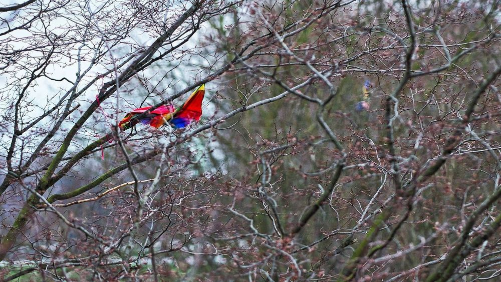 Christopher Robin lost his mind Bad Weather Grey Day Kite Lost Lost Toy Childhood Lost Kite Sad Tourism Tree