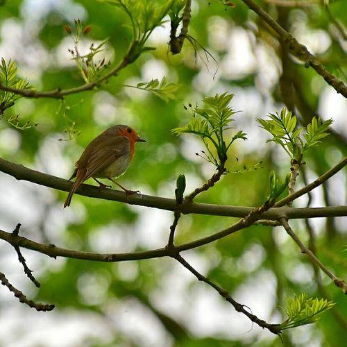 Bird Perching Tree Branch Owl Animal Themes Close-up Plant