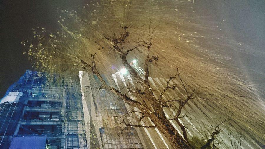 Nightwalk Tree Urban Buildings City Life
