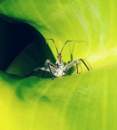 Animal Wildlife Animal Themes Animal One Animal Animals In The Wild Insect Invertebrate Animal Body Part Green Color Macro Arthropod Close-up Nature Spider No People Arachnid Fragility Outdoors Zoology Beauty In Nature