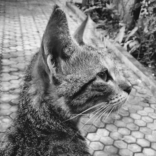 Vscocam Cat Blackandwhite Elegant Profound Now Love
