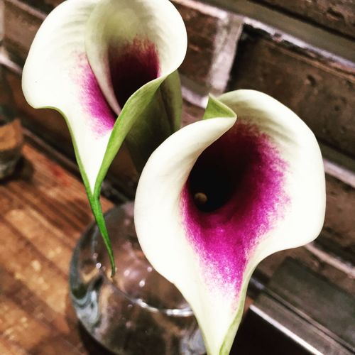 Calla lily Enjoying Life Flowers Calla Lily Pink Magenta Beauty Callalily Flowers,Plants & Garden Flower Collection Flowerporn Beautiful Nature EyeEm Nature Lover Naturelovers
