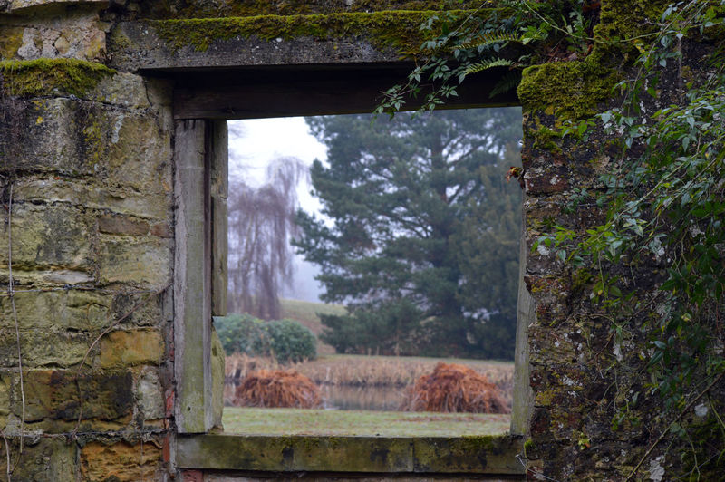 Scenic view of forest seen through window