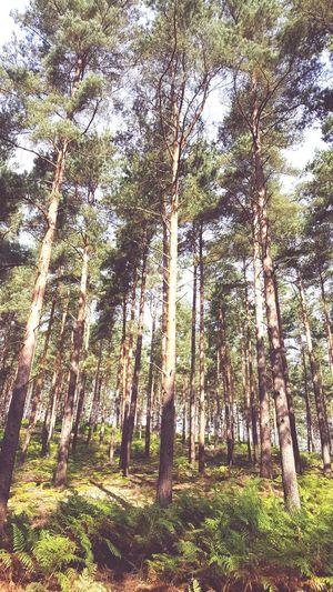 See the Wood for the Trees Tree Forest Nature Tree Trunk Growth WoodLand Low Angle View Day Outdoors No People Beauty In Nature Tranquility Green Color Tranquil Scene Scenics Tree Area Branch Sky Weareallconnected