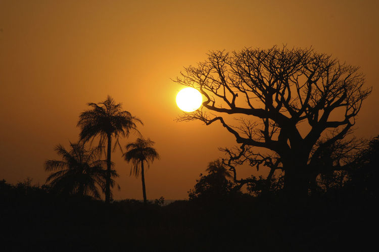 Niafrang Senegal Niafarang Niafourang Niafrang Palm Tree West Africa Baobab Baobab Tree Beauty In Nature Casamance Nature Orange Color Outdoors Palm Trees Scenics Senegal Silhouette Sun Sunset Tranquil Scene Tranquility Tree