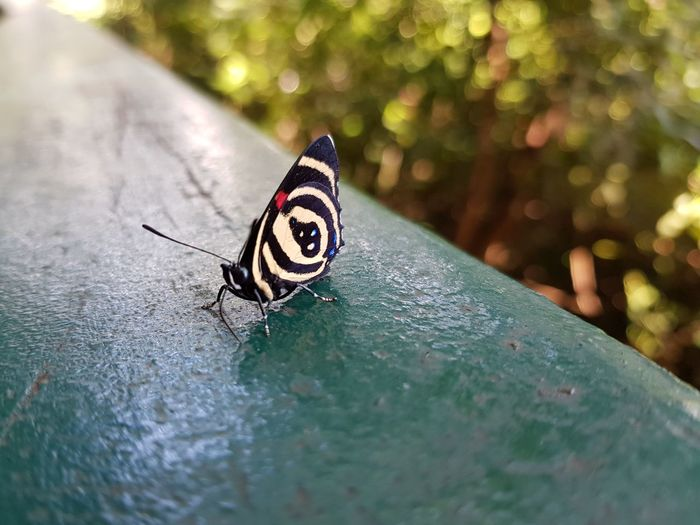 Close-up of butterfly on retaining wall