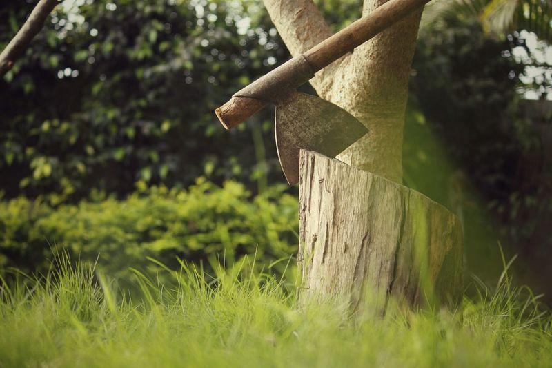 Axe On Tree Stump