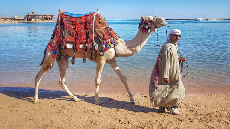 Just taking the camel for a walk. Malephotographerofthemonth Landscape Photography Creative Light And Shadow Color Photography Camel Walking In Sand Egyptian Culture Sea Beach Sand Wave Sky Camel Working Animal Saddle Seascape Shore