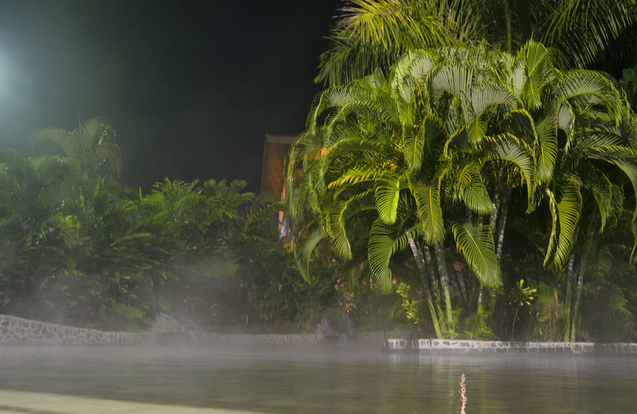 Spa with tropical plants - La Fortuna, Alajuela province, Costa Rica Alajuela Bath Costa Rica Palm Palm Tree Pond Swimming Pool At Night Beauty In Nature Freshness Illuminated Jacuzzi  Nature Night No People Outdoors Palm Tree Palm Trees Pool Poolside Relax Spa Swimming Pool Tourism Tropical Climate Water