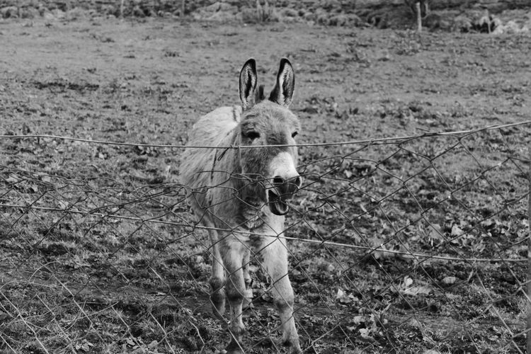 Animal Themes Field Mammal One Animal Nature No People Outdoors Day Grass Domestic Animals Donkey Hee Hawlways Calls Me That Welcome To Black The Street Photographer - 2017 EyeEm Awards The Great Outdoors - 2017 EyeEm Awards Break The Mold BYOPaper! Pet Portraits