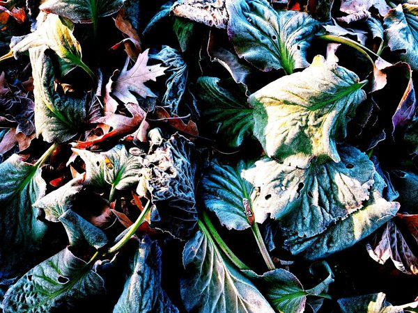 EyeEm Selects Outdoors Plant Nature No People Full Frame Leaf Close-up Winter