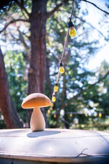 fungi Yellowlight Mushrooms Fungi Beetle Lifesarepost Gitmesteak Powerlines Woods Volkswagen Trees