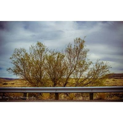 Tinythaliaphotography Fstopandstare Photography IGDaily sky clouds trees travel roadtrip desert followforfollow f4f
