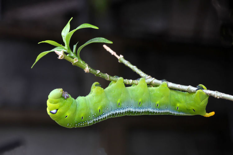 Animal Themes Animals In The Wild Beauty In Nature Close-up Day Focus On Foreground Fragility Freshness Green Color Growth Insect Larva  Leaf Nature No People One Animal Outdoors Plant Stem