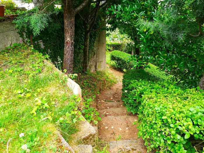 Green Color Nature Day Tree Outdoors Growth Grass No People Plant Beauty In Nature Mystical Atmosphere Mystic World Of Nature Mistic Atmosphere