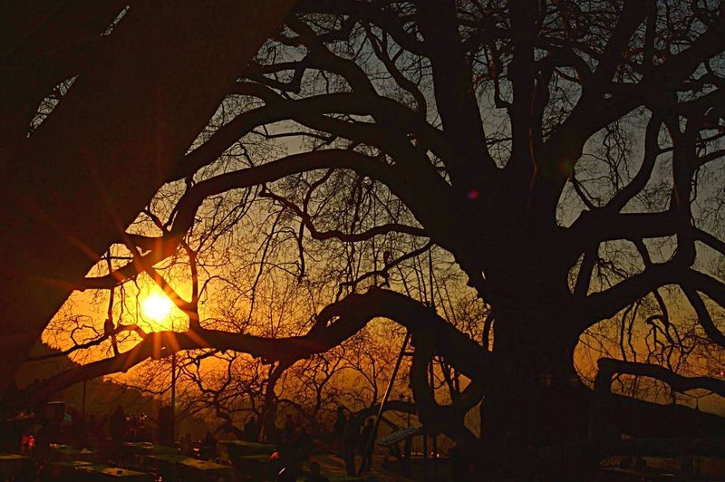 Tree Plant No People Nature Sunset Branch Silhouette Sky Growth Beauty In Nature Sunlight Outdoors Low Angle View Tranquility Orange Color Tree Trunk Pattern Architecture Trunk Leaf