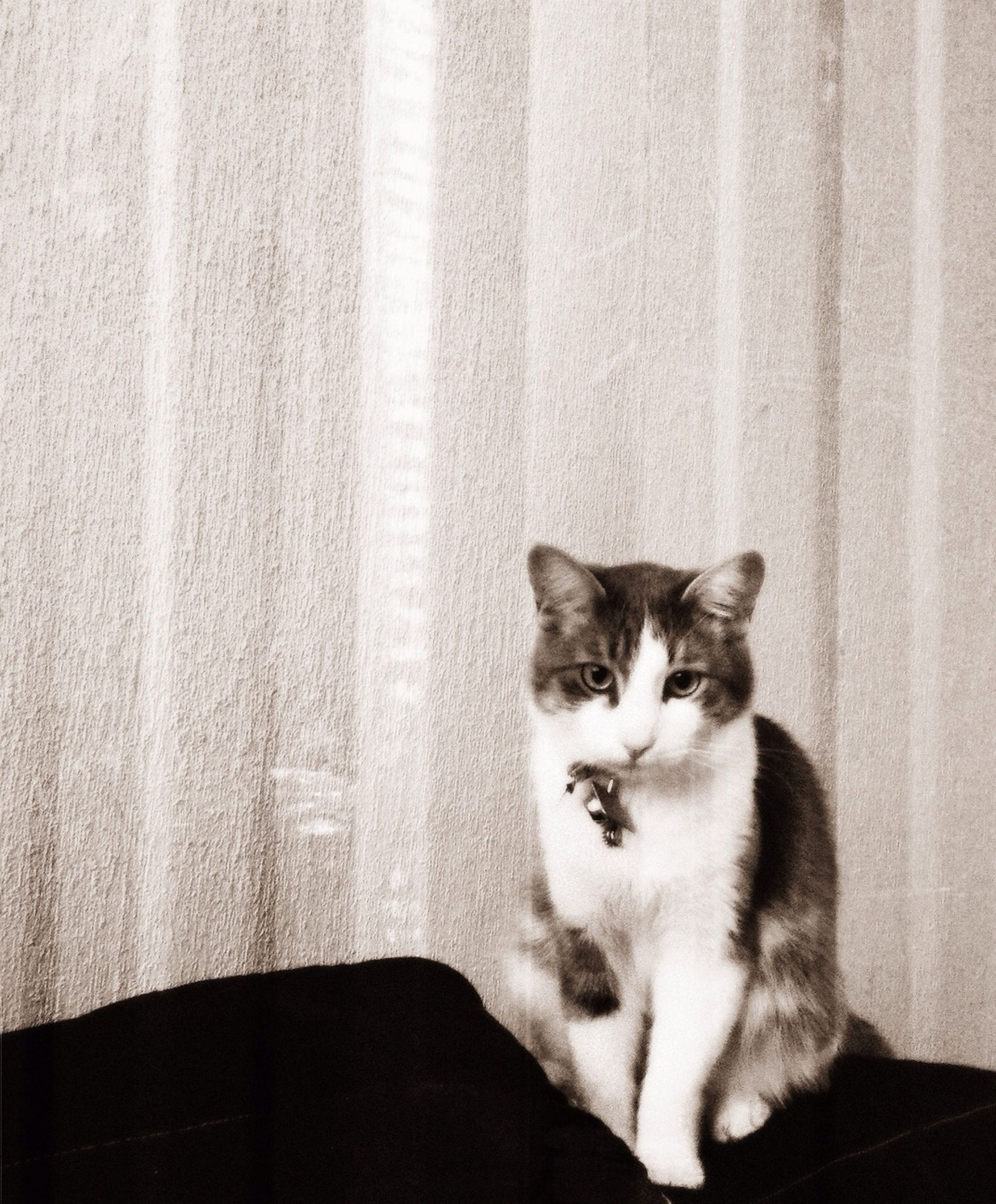 pets, domestic cat, domestic animals, cat, mammal, animal themes, feline, one animal, portrait, looking at camera, indoors, whisker, relaxation, sitting, wall - building feature, home interior, staring, no people, front view, alertness