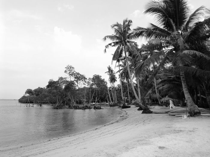 Beach Day Beach Time Beach View Beachphotography Beach Tropical Climate Palm Tree Landscape Nature No People Outdoors Water Sea Huaweimate9 Huawei Photography Huawei Leica Huawei Mate 9 Huaweiphotography Sky Tree EyeEmNewHere Black And White Friday