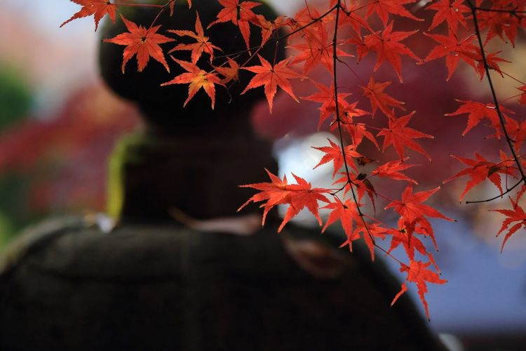 🍁 Maple Leaf Stone Lantern Red Leaves Maple Tree Leaf Point Of View Change Autumn Close Up Close-up Autumn Colors Maple Leaf Maple Nature Taking Photos Popular Photos Beauty In Nature My Favorite Place Tadaa Community EyeEm Best Shots EyeEm Best Shots - My Best Shot