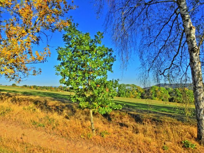 Beauty In Nature Blue Day Grass Green Green Color Landscape Nature Outdoors Rural Scene Scenics Sky Tranquil Scene Tree Tree Trunk