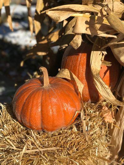 Close-up of pumpkin pumpkins