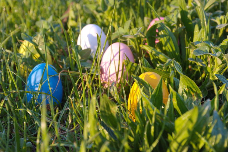 Egg Easter Green Color Easter Egg Nature Grass Celebration Growth Holiday No People Close-up Day Food Holiday - Event Springtime Vulnerability  Outdoors Colorful Multicolored Yellow Blue Pink Color White