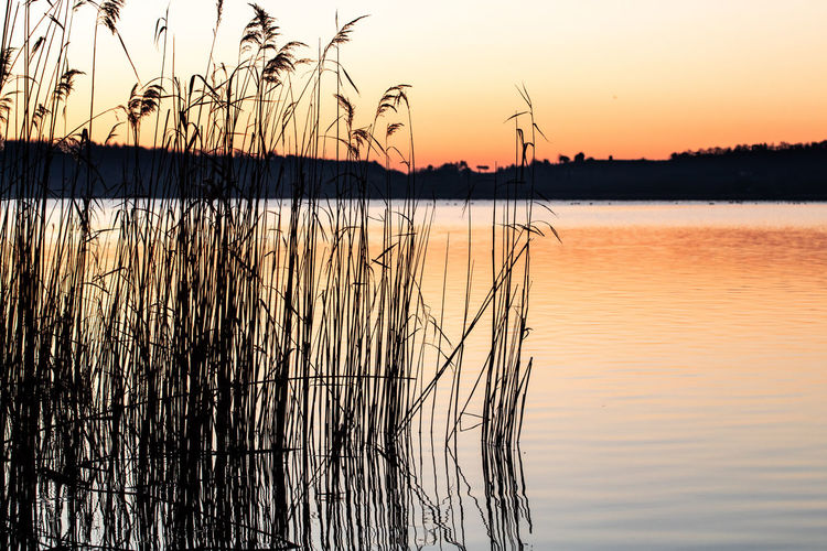 transmit calm Landscape Italy🇮🇹 Lakevico Lago Di Vico Canon Reflex EyeEm Gallery Colors Art Passion Photo EyeEm Wild Dettails  New Day Yellow Sun Photoday EyEmselect Eye Photography Bird Water Sunset Flamingo Lake Silhouette Reflection Standing Water Idyllic Sunlight Reflection Lake Romantic Sky