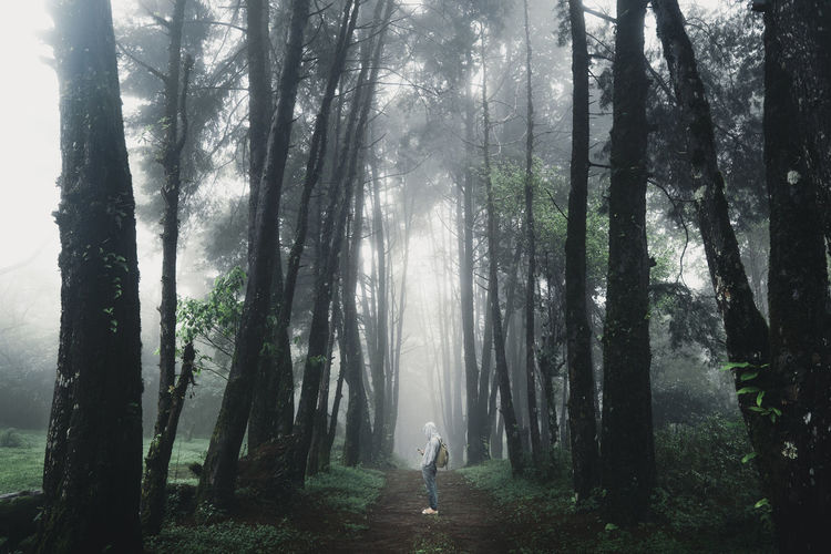 Man wearing hood standing on footpath amidst trees in forest