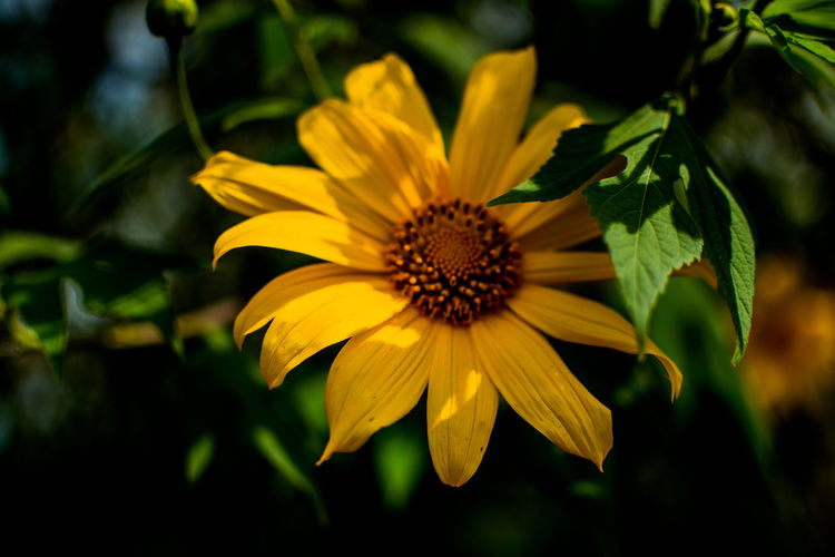 Flowering Plant Flower Plant Petal Fragility Flower Head Freshness Inflorescence Vulnerability  Close-up Beauty In Nature Yellow Pollen Growth Focus On Foreground Nature No People Day Outdoors Gazania