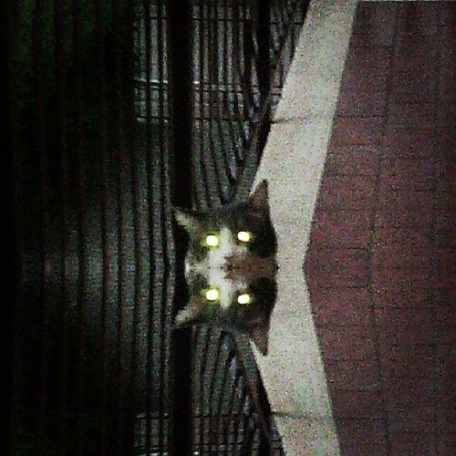 Cateyes Cat Stupidcat Iamwatchingyou miao occhiafaro