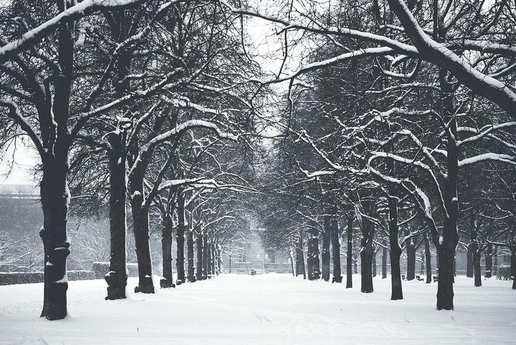 The EyeEm Facebook Cover Challenge Snowing München Deutschland B&w Photography Hofgarten