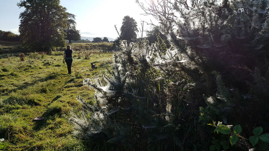 Walking the Dog Dewy Spiders Web Beauty In Nature Bushes Dog Outdoors Spiderwebs Walking