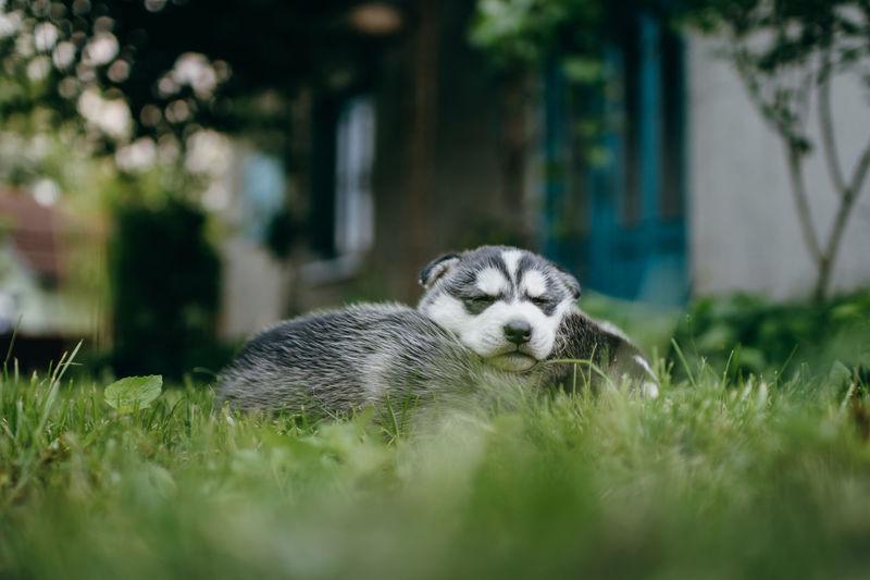 Dog cubs sleeping